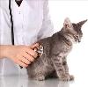 Ветеринарные клиники в Глазуновке